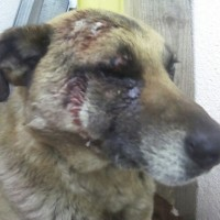 Пропала собака, окрас смешанный