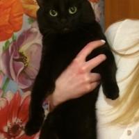 Потерялся кот, окрас черный