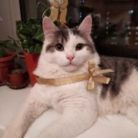 Пропал кот, окрас серо-белый