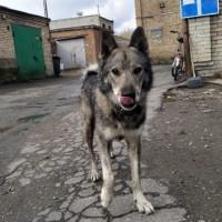 Найдена собака, окрас черно-серо-белый