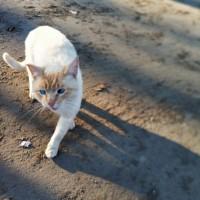 Найден кот, окрас белый с рыжими пятнами