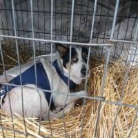 Потерялась собака, окрас бежевый