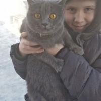 Найдена кошка, окрас дымчатый
