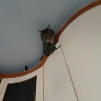 Пропал кот, окрас серый, полосатый лапки и грудка белые