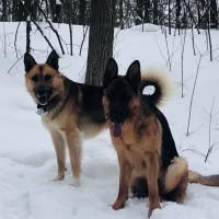 Найдены собаки, окрас черно-коричневый