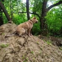 Пропала собака, окрас коричневый