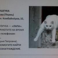 Потерялась кошка, окрас белый