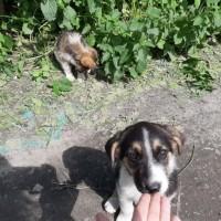 В добрые руки, щенки
