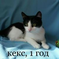 В добрые руки, котики и кошечки