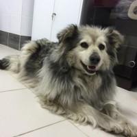 Пропала собака, окрас серо-черный