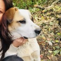 Потерялась собака, окрас белый с рыжими пятнами