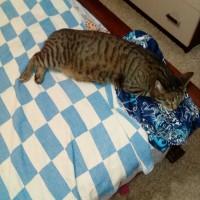Потерян кот