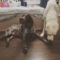 Найден пёс, окрас пятнистый