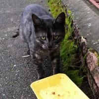 Найден кот, окрас черно-серый