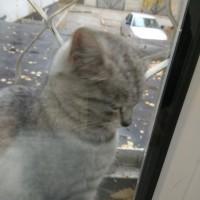 Найдена кошка, окрас серый, полосатая