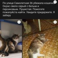 Убежала кошка, окрас трехцветный, пушистая