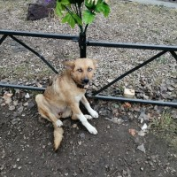 Найдена собака, окрас коричнево-белый