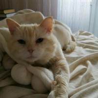 В добрые руки, кот, окрас рыже-белый