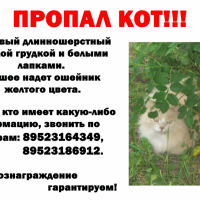 Потерялся кот, окрас бежевый