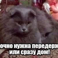 В добрые руки, кот, окрас дымчатый, пушистый