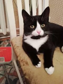 Пропал кот, окрас черно-белый