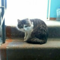 Найден кот, окрас смешанный