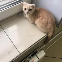 Найден кот\кошка, окрас рыжий