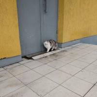 Найдена кошка, окрас серо-белый с рыжицой
