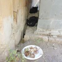 В добрые руки два котенка цвет черный