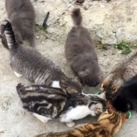 В добрые руки, кошки и коты