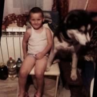 Потеряна собака, порода хаски, черный ошейник
