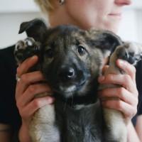 В добрые руки, собачка, окрас черно-коричневый