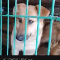 Найден пёс, окрас светло-коричневый