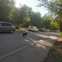 Найден пёс\собака, окрас темный