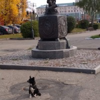 Найден пес, окрас черно-белый