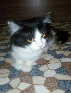 Потерялась кошка, окрас черно-белый