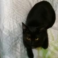 Пропал котик, окрас черный