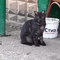 В добрые руки, кот, окрас черно-серый