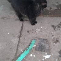 В добрые руки, кот, окрас черный