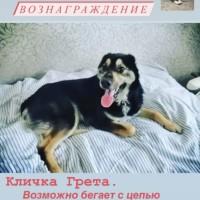 Потеряна собака, окрас бежево-черный