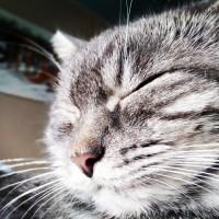 Потерялась кошка, окрас серый, полосатый