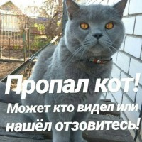 Пропал кот, порода британец, окрас серый