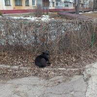 Найдена собака, окрас черный