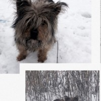 Найдена собака, окрас серо-коричневый
