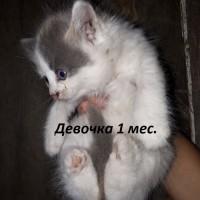 В добрые руки, котята
