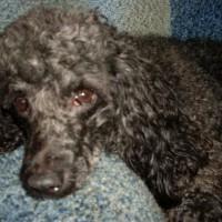Пропала собака. Помогите пожалуйста найти.