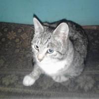 Найден кот