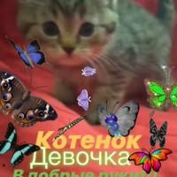В добрые руки, котята и кошка, окрас смешанный