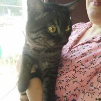 Найден кот, окрас черно-серый, полосатый