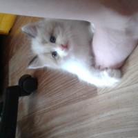 В добрые руки, котик, окрас бело-серый
